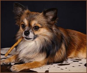 犬の種類と個性の違い