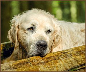 老犬をしつける時の方法