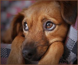 犬が感じるストレスとストレスケア