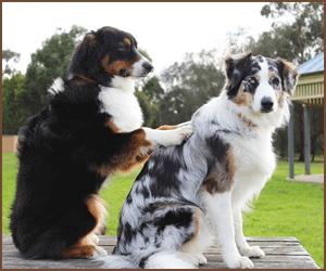 犬のトレーニング方法とケア方法