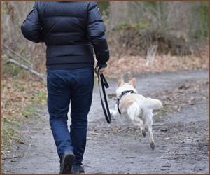 散歩と犬の運動の重要性